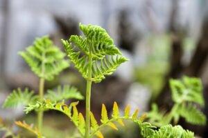 plantas-que-precisam-de-sombra