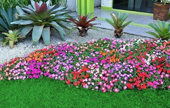 Flores Ideais para o seu Canteiro  Blog Giuliana Flores