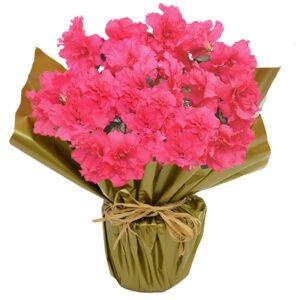 Linda Azaleia Pink Plantada - Plantas que purificam o ar