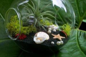 jardins-em-miniatura