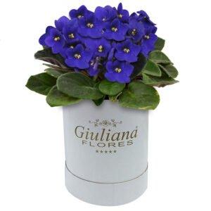 Encanto das Violetas - Decorar seu jardim para festas