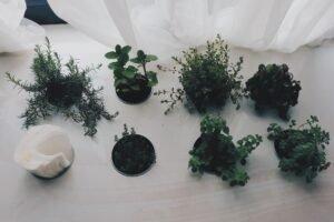com-fazer-mudas-plantas