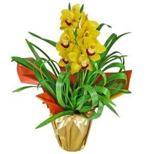 orquideas-amarela