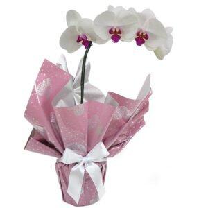 orquideas-branca