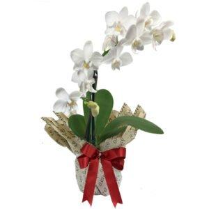 orquideas-raras-brancas