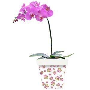 orquidea-rosa-cancer-mama