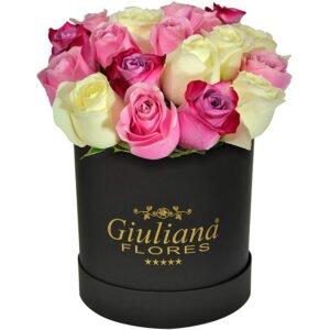 Curiosidades sobre as rosas - Majestosas Rosas Mistas Black