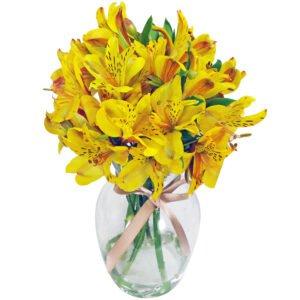 Flores amarelas - Admiracao amarela no vaso