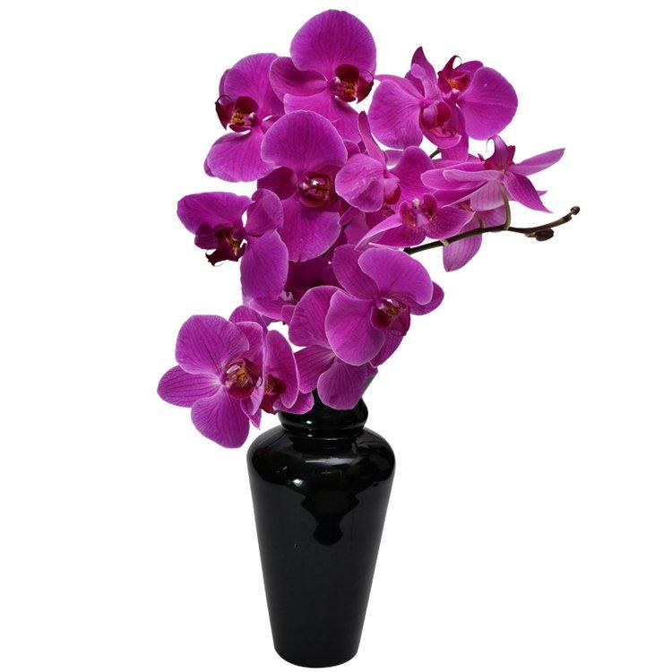 orquidea02