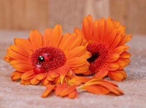 flores-laranja-verao
