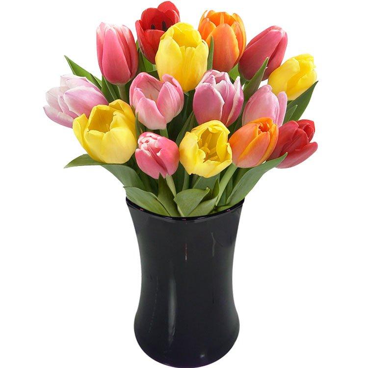tulipa01