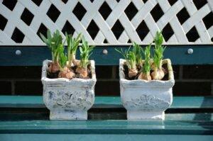Como cultivar uma horta em apartamento