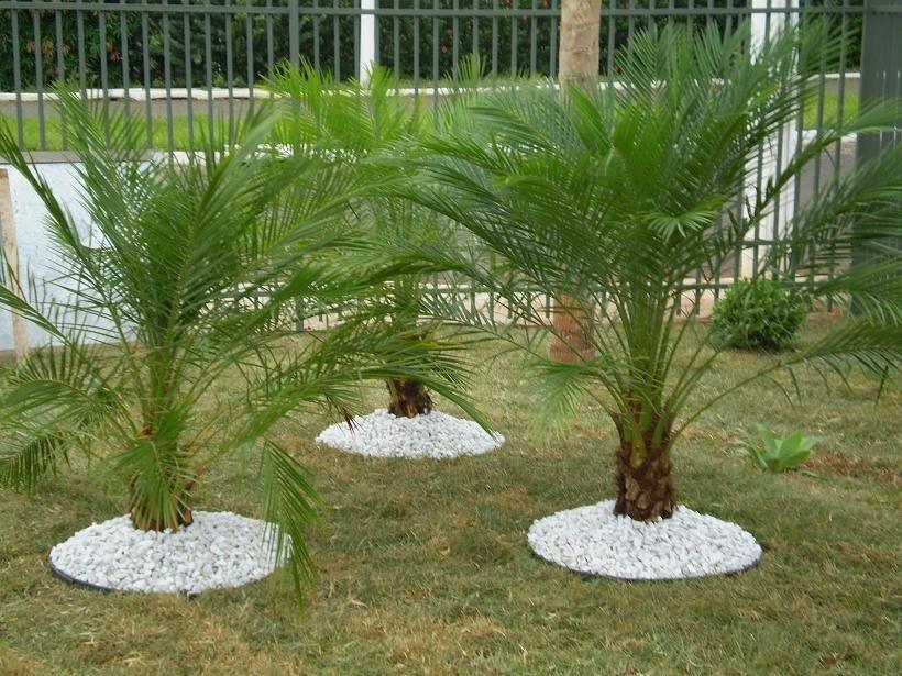 plantas mediterraneas jardim : Plantas para Jardim - Confira Dicas de Esp?cies Blog ...