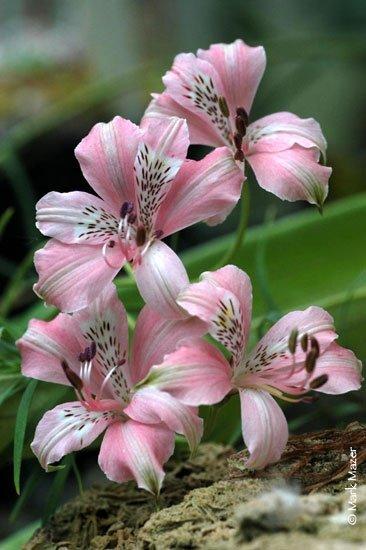 flores tropicais jardim ? Doitri.com
