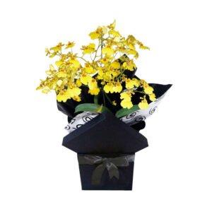 Tipos de orquídeas - Orquídea Chuva de Ouro