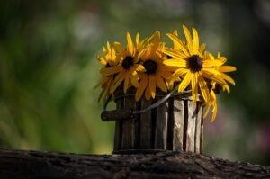 vasos-de-flores-madeira