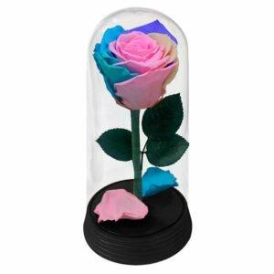 A Bela Rosa Candy Color
