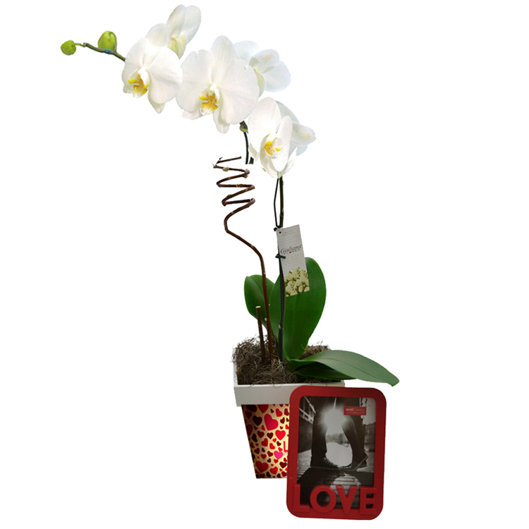 orquidea-branca-porta-retratos-love-presentear