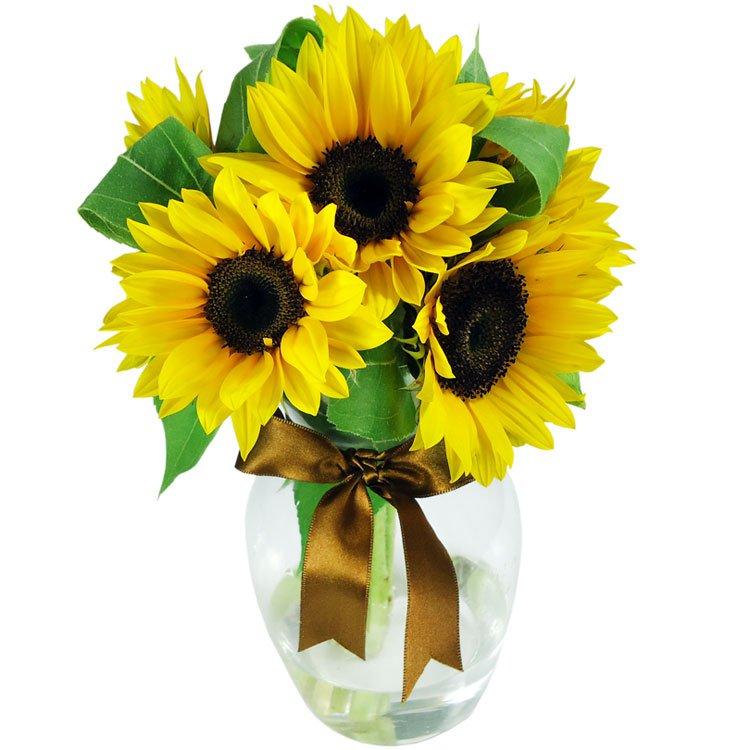 Flores para o Dia dos Pais: Surpresa de Girassóis no Vaso