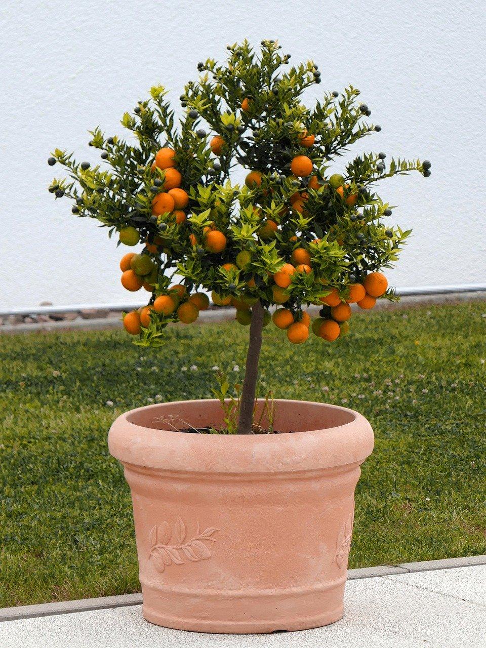plantio-de-arvores-frutiferas