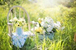 Flores-da-Primavera