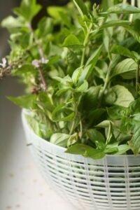 manjericao-sete-ervas