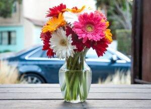 Conservar Flores: Dicas para as flores durarem Mais