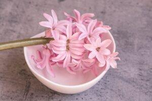 flor-jacinto