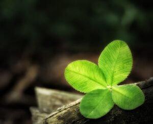 origem-trevo-quatro-folhas