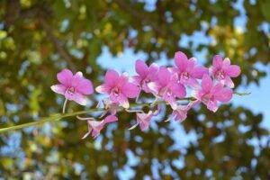 local-ideal-orquidea