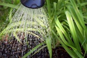 regar plantas no solo