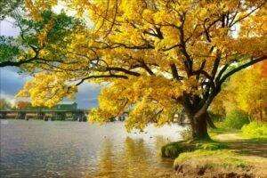 Árvore Ipê - Amarelo