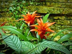 Plantas que Podem ser Usadas em Decorações: bromélias