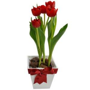 tipos de tulipa