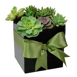 mini-jardim-suculentas