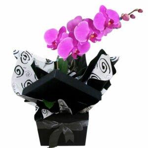 Glamurosas Orquídeas Pink