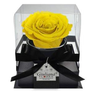 rosa-preservada-amarela