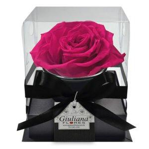 rosa-preservada-pink