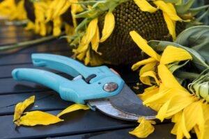 cuidar das flores no tempo seco