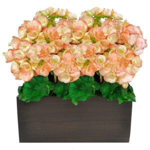 begonias-como-cuidar-de-flores