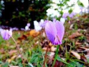 Regue-a flor-em-dias-alternados