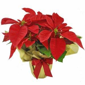 Tradição de Natal Presente