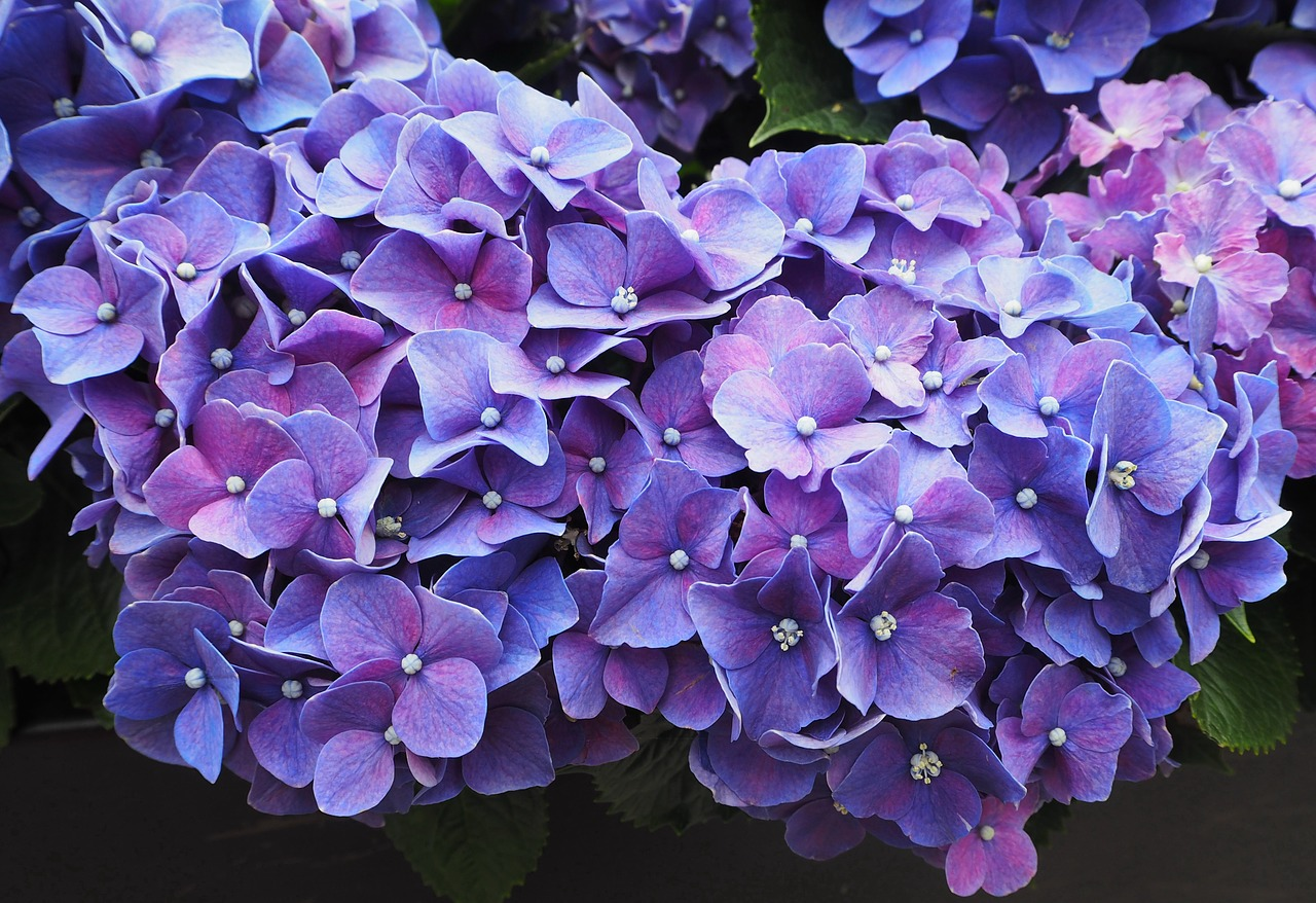 Violeta é uma das flores que viram perfume