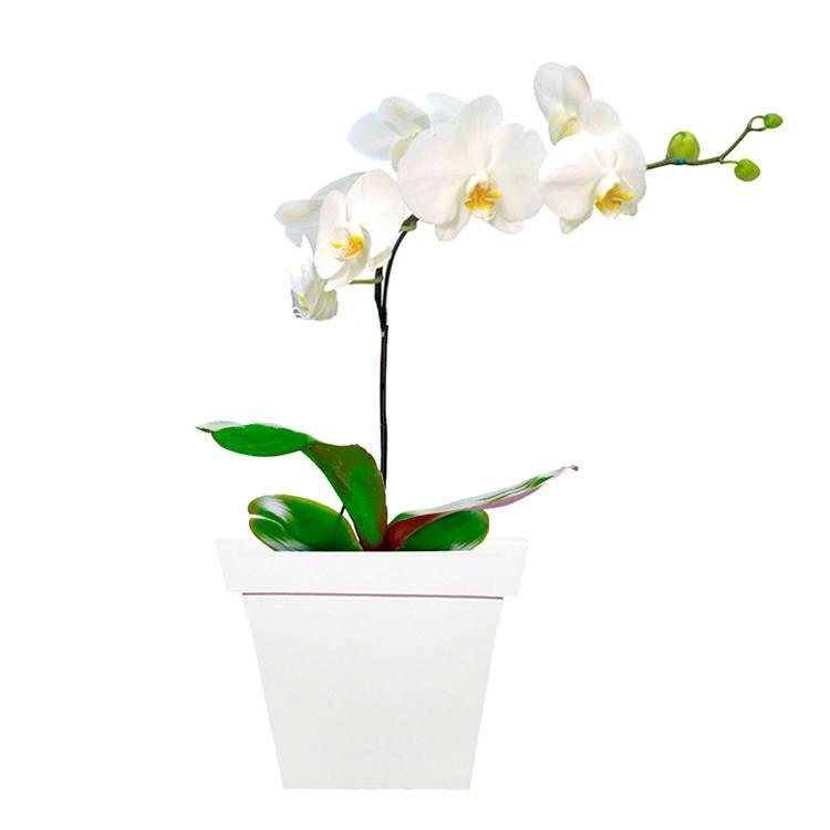 Deslumbrante Phalaenopsis Branca - decoração de casamento