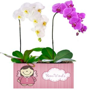 Bem Vindo com Orquídeas Pink e Branca