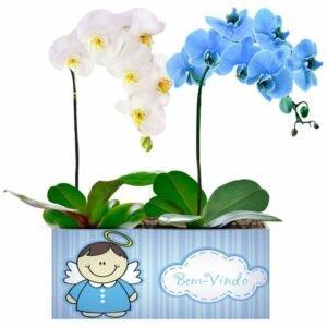 Bem Vindo com Orquídeas Branca e Azul
