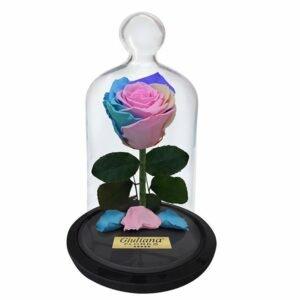 A Rosa Encantada Candy Color