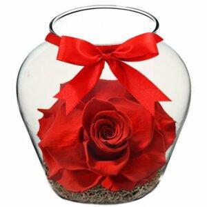 Beleza da Rosa Encantada Vermelha