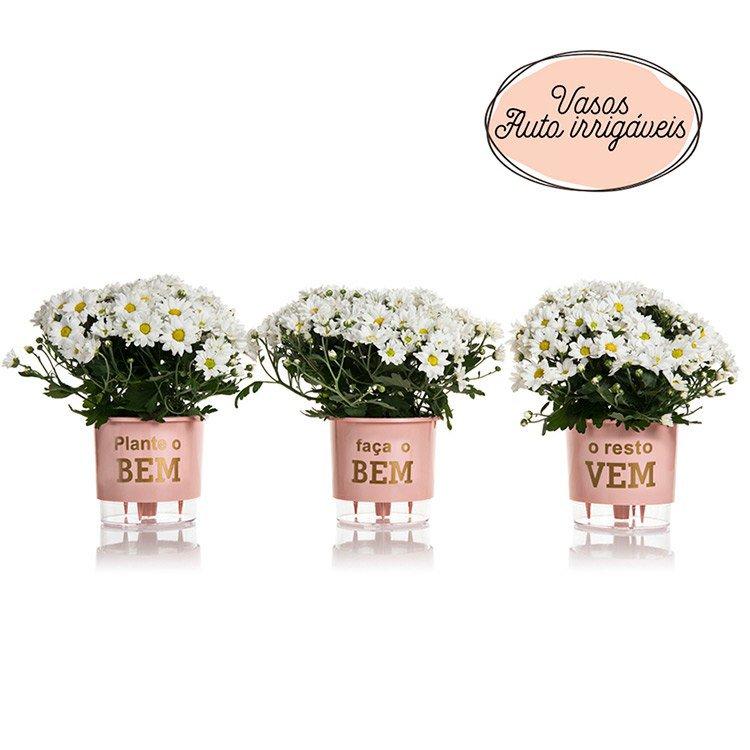 Entrega de flores - Kit Margaridas
