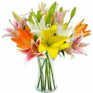 Flores Para Amiga — Lírios Coloridos